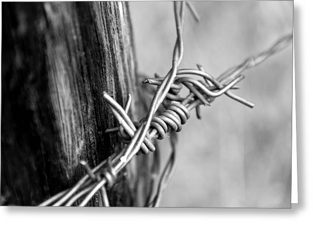 Wire Mixed Media Greeting Cards - Barbed BW Greeting Card by Angelina Vick