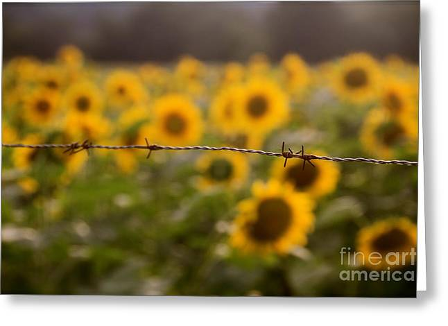 Buttonwood Farm Greeting Cards - Barbed Greeting Card by Dorothy Drobney