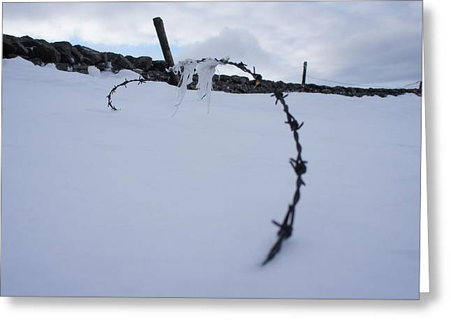 Riley Handforth Greeting Cards - Barbed Wire Greeting Card by Riley Handforth