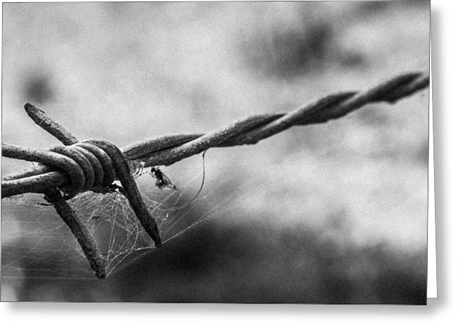 Spider And Fly Greeting Cards - Barbwire and Spiders Web Black and White Greeting Card by Justin Woodhouse