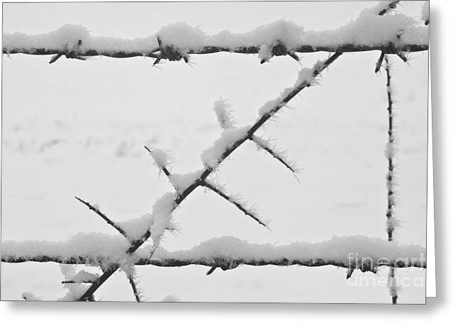 Heiko Greeting Cards - Barbwire Fence in Snow 1 Greeting Card by Heiko Koehrer-Wagner