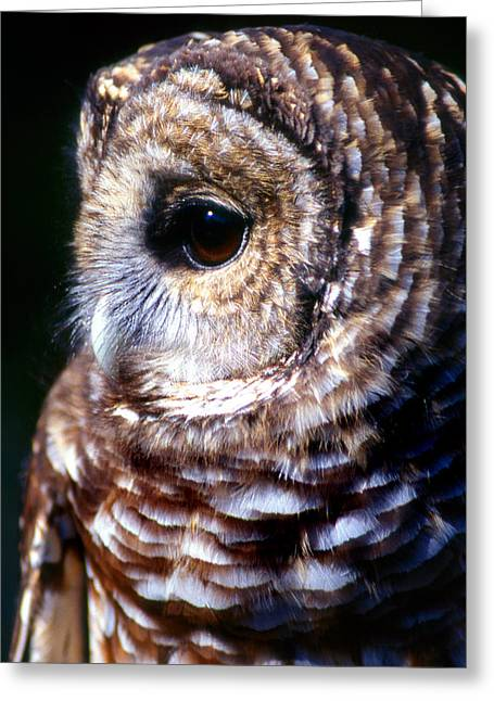 Photos Of Birds Greeting Cards - Bard Owl Greeting Card by Skip Willits
