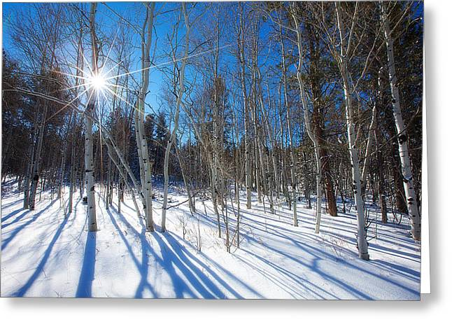 Winter Sun Greeting Cards - Bare Aspens Greeting Card by Darren  White