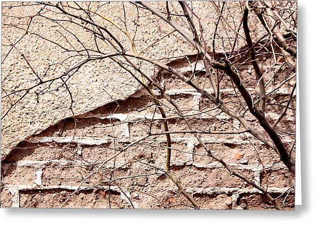 Bare Tree Adobe Wall Greeting Card by Joe Kozlowski