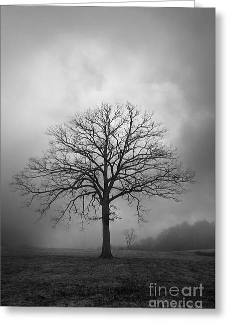 Bare Oak Tree Greeting Cards - Bare Tree And Clouds BW Greeting Card by Dave Gordon