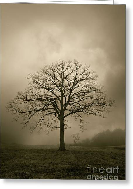 Warm Tones Digital Art Greeting Cards - Bare Tree And Clouds  Greeting Card by David Gordon