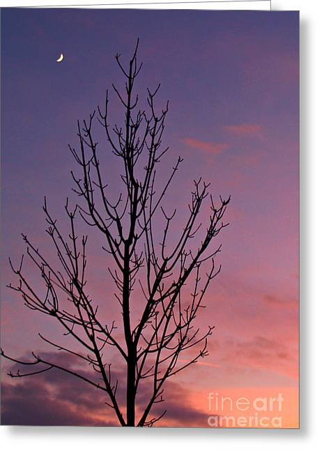 Bare Trees Greeting Cards - Bare Tree and Crescent Moon at Dusk Greeting Card by Anna Lisa Yoder
