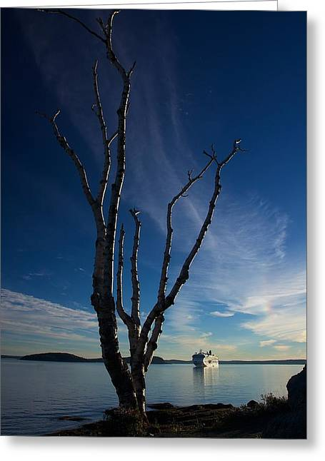 Maine Shore Greeting Cards - Bare Tree and Cruise Ship Greeting Card by Stuart Litoff