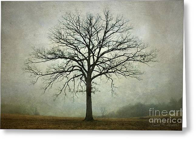 Chromatic Photographs Greeting Cards - Bare Tree and Fog Greeting Card by Dave Gordon