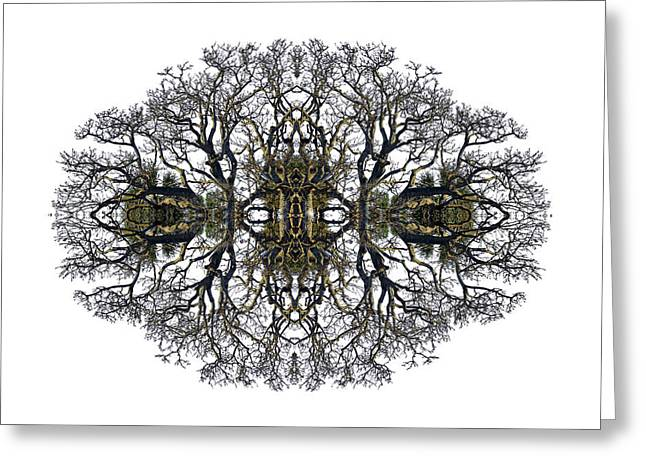 Bare Tree Greeting Card by Debra and Dave Vanderlaan