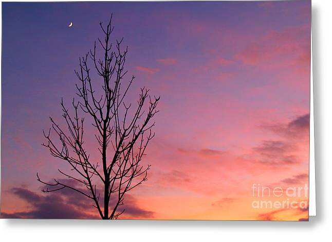 Bare Trees Greeting Cards - Bare Tree in Sunset with Crescent Moon Greeting Card by Anna Lisa Yoder