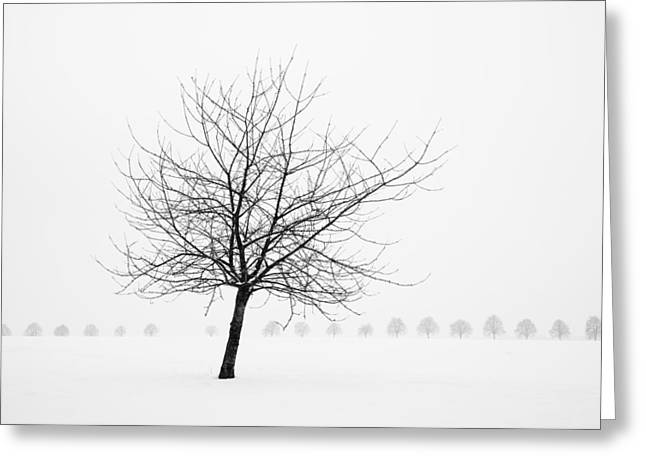 Bare Tree In Winter - Wonderful Black And White Snow Scenery Greeting Card by Matthias Hauser