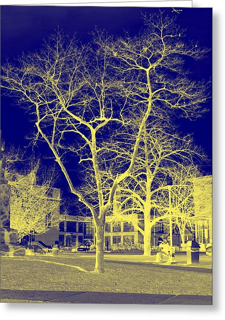 Bare Trees Greeting Cards - Bare Tree Greeting Card by Maria Firkaly