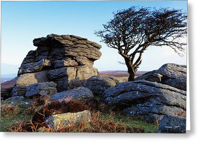 Tor Greeting Cards - Bare Tree Near Rocks, Haytor Rocks Greeting Card by Panoramic Images