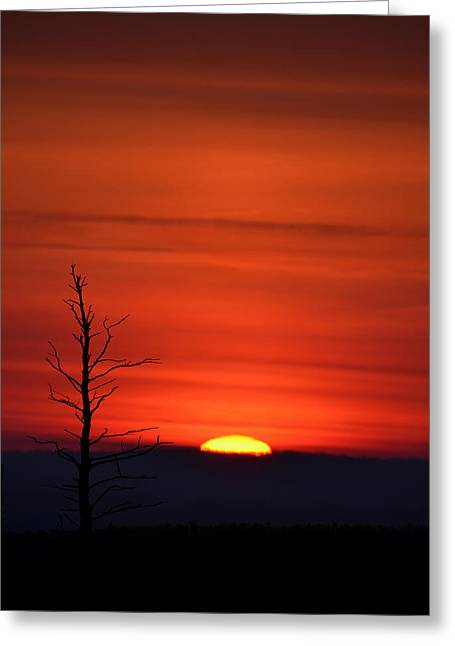 Bare Trees Greeting Cards - Bare Tree Sunrise Greeting Card by Bill Cannon