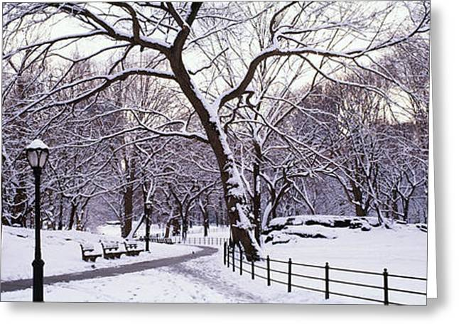 Absence Greeting Cards - Bare Trees During Winter In A Park Greeting Card by Panoramic Images