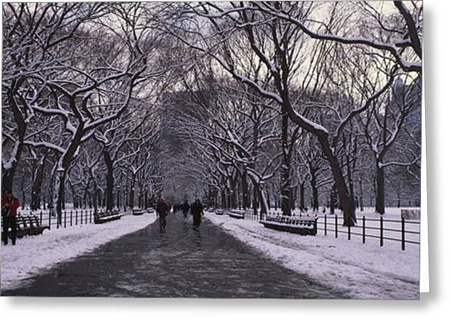 Central Park Winter Greeting Cards - Bare Trees In A Park, Central Park, New Greeting Card by Panoramic Images