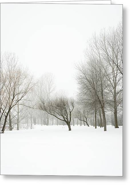 Bare Trees Greeting Cards - Bare Trees In Winter Fog Greeting Card by Donald  Erickson