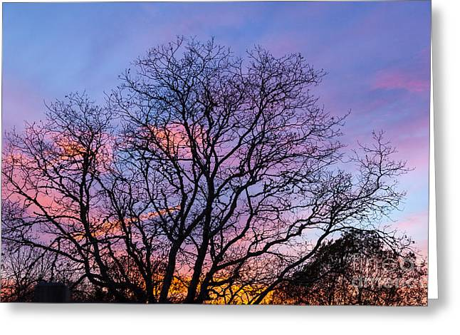 Bare Trees Greeting Cards - Bare Trees Greeting Card by Michelle Wiarda