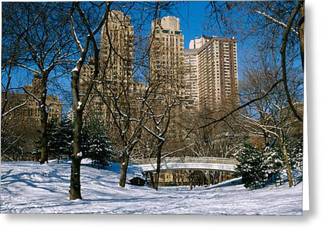 Snow New York City Greeting Cards - Bare Trees With Buildings Greeting Card by Panoramic Images