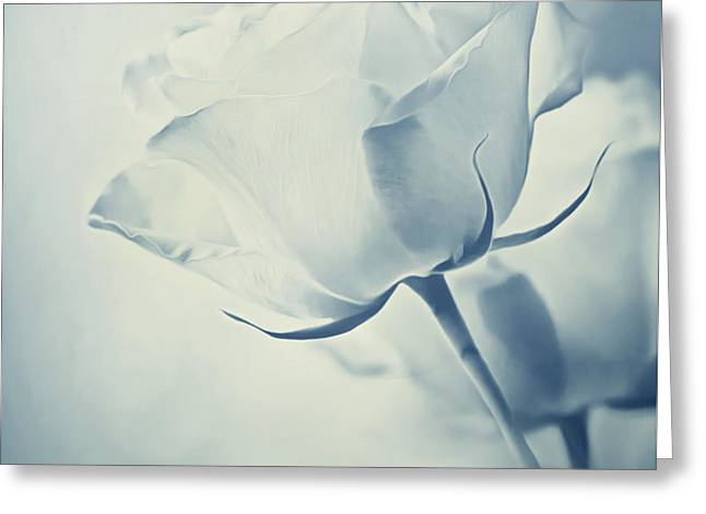 Darkroom Greeting Cards - Barely There Rose Greeting Card by Georgiana Romanovna