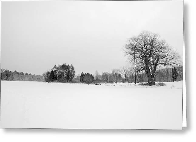 40mm Greeting Cards - Bark and Snow Greeting Card by CJ Schmit