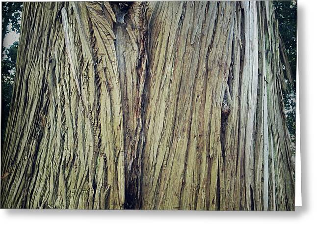 Lumber Greeting Cards - Bark Greeting Card by Les Cunliffe