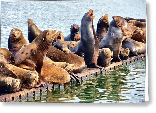 Sea Lions Greeting Cards - Noisy Sea Lions Greeting Card by Jim Romo