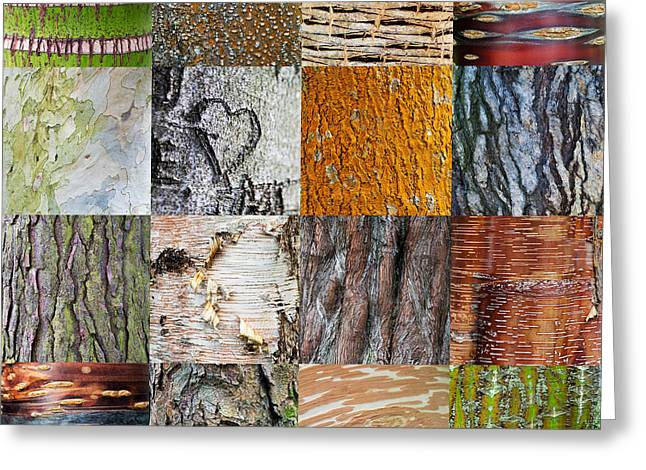 Birch Tree Greeting Cards - Barking up the Right Tree Greeting Card by Tim Gainey
