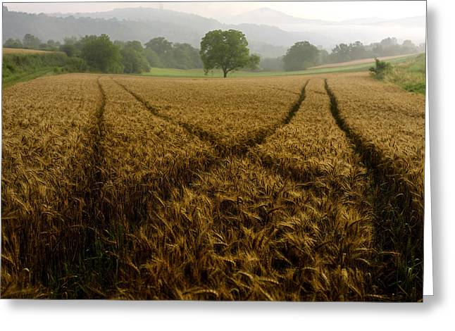 Cultivation Greeting Cards - Barley field. Auvergne. France. Europe. Greeting Card by Bernard Jaubert