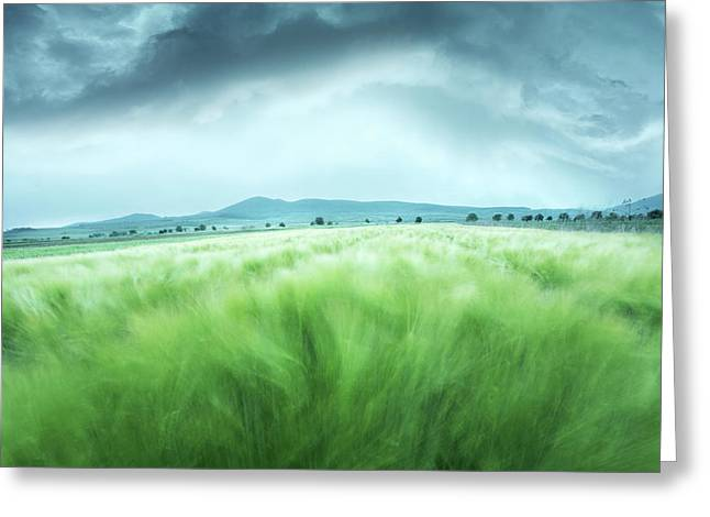 Barley Field Greeting Card by Floriana Barbu