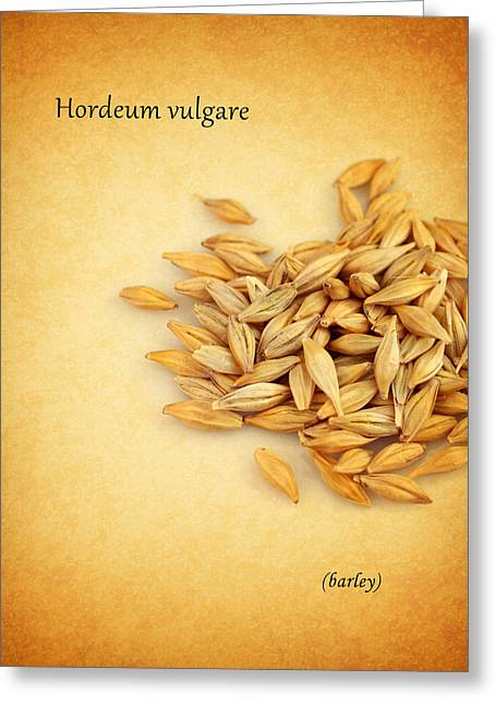 Barley Greeting Cards - Barley Greeting Card by Mark Rogan