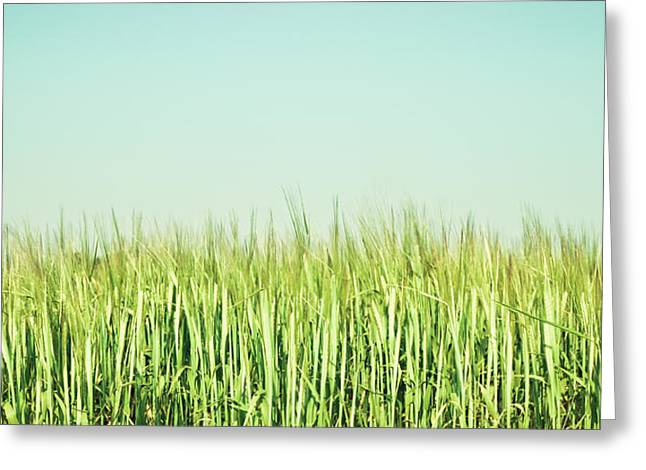 Breezy Greeting Cards - Barley Greeting Card by Tom Gowanlock
