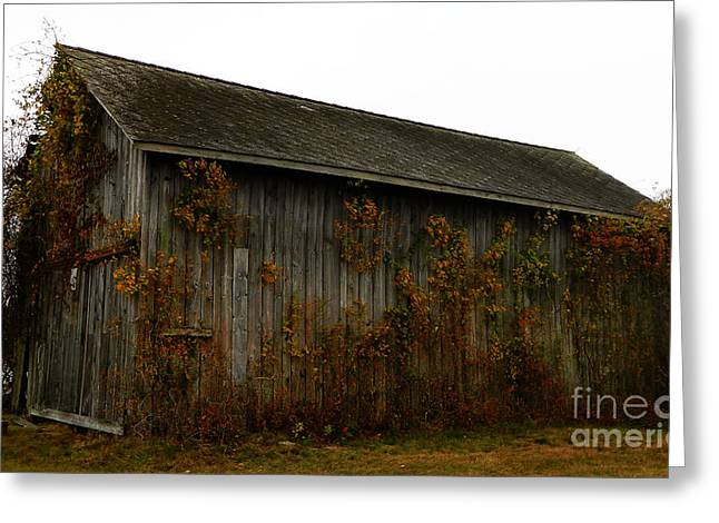 Sheds Greeting Cards - Barn 2 Greeting Card by Andrea Anderegg