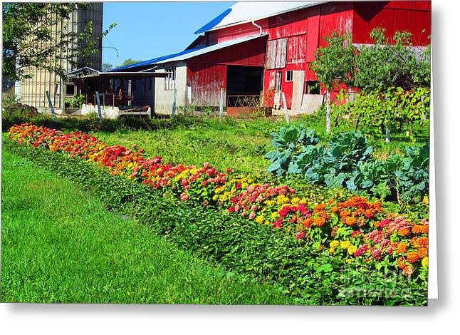 Barn And Garden Greeting Card by Tina M Wenger