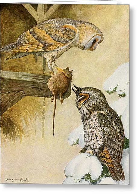 1874 Greeting Cards - Barn and Long Eared Owls Greeting Card by Louis Agassiz Fuertes