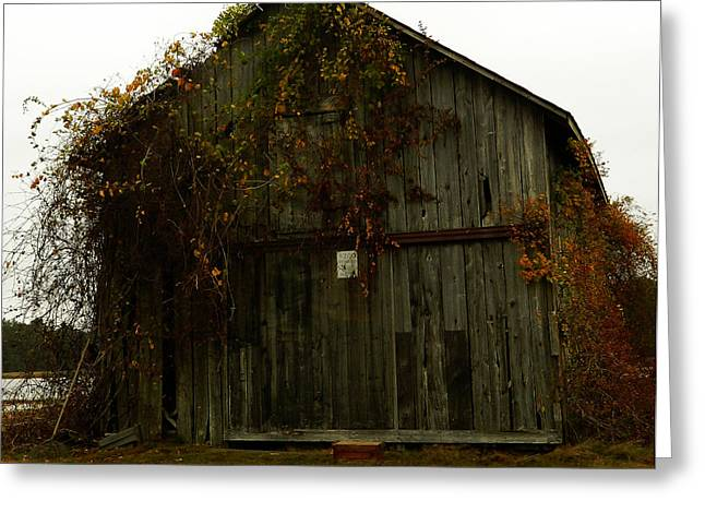 Red Fallen Leave Photographs Greeting Cards - Barn Greeting Card by Andrea Anderegg