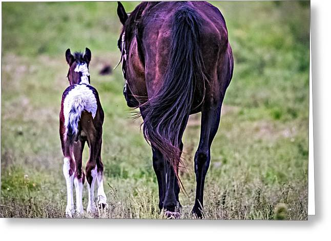Horses With Nature Greeting Cards - Barn Bound Greeting Card by Paul Freidlund