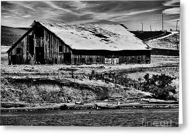 Cattle Farming Greeting Cards - Barn by the River bw Greeting Card by Cheryl Young
