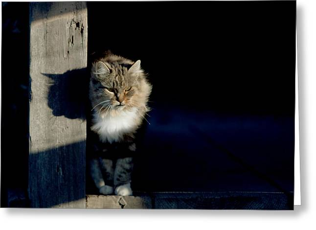 Barn Cat Greeting Card by Art Block Collections