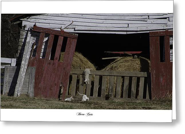 Brentwood Barn Greeting Cards - Barn Cats Greeting Card by Gina Munger