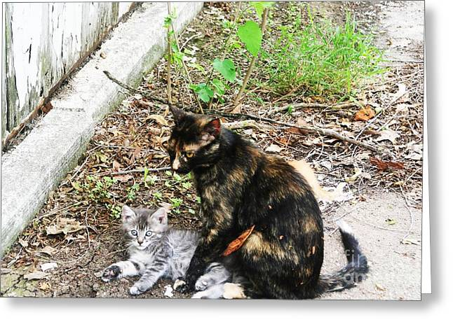 Photos Of Kittens Greeting Cards - Barn Cats Greeting Card by PainterArtist FIN