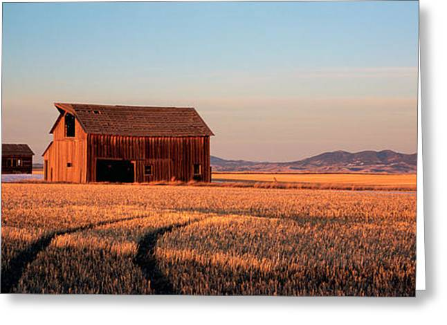 Old Barns Greeting Cards - Barn In A Field, Hobson, Montana, Usa Greeting Card by Panoramic Images