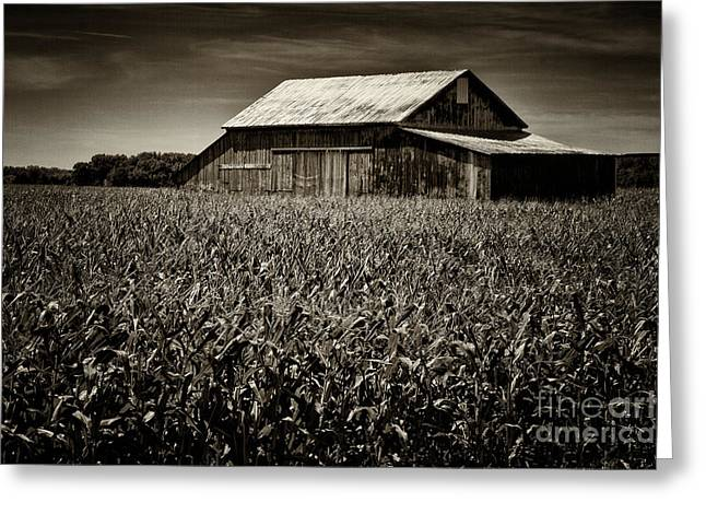 Cornfield Greeting Cards - Barn in Cornfield Greeting Card by Todd Bielby