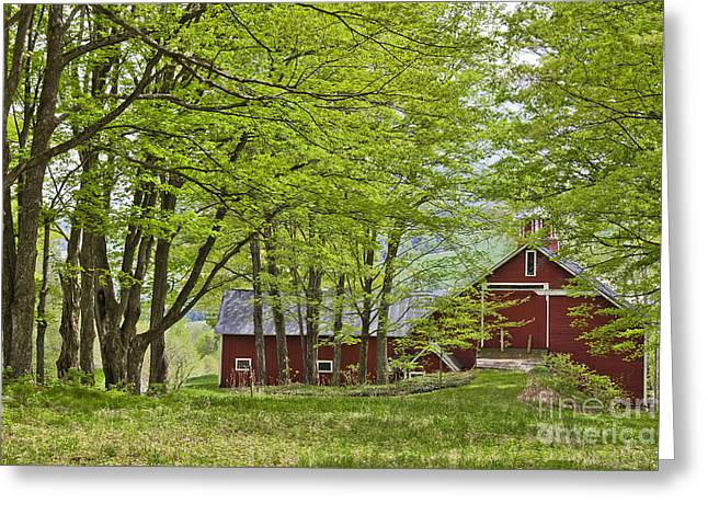 Red Roofed Barn Greeting Cards - Barn In Spring Woods Greeting Card by Alan L Graham