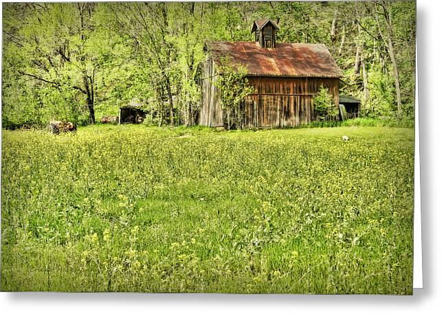 Hartsburg Greeting Cards - Barn in Wild Turnips Greeting Card by Cricket Hackmann