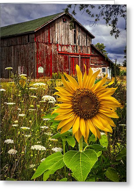 Midwest Greeting Cards - Barn Meadow Flowers Greeting Card by Debra and Dave Vanderlaan