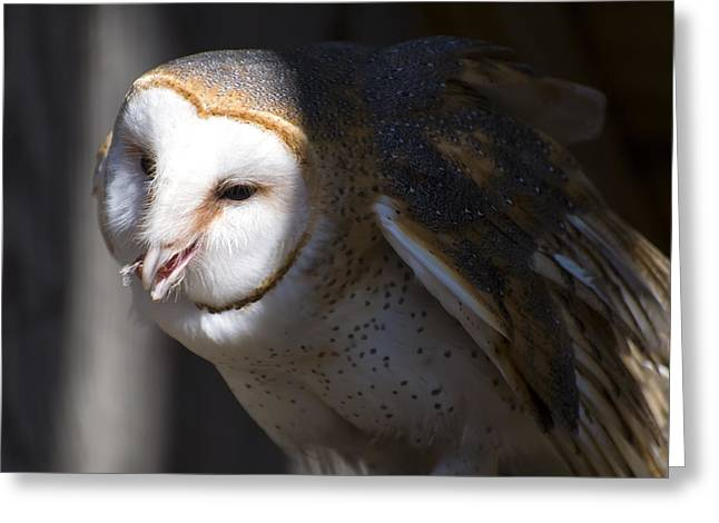 Barn Owl 1 Greeting Card by Chris Flees