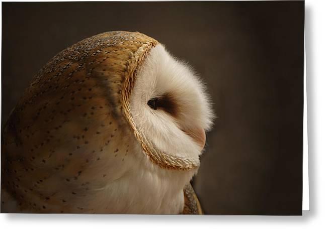 Barn Owl 3 Greeting Card by Ernie Echols