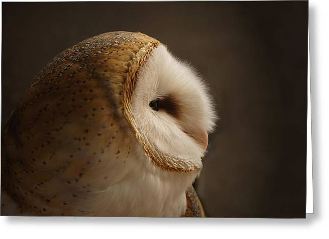 Owl Photographs Greeting Cards - Barn Owl 3 Greeting Card by Ernie Echols